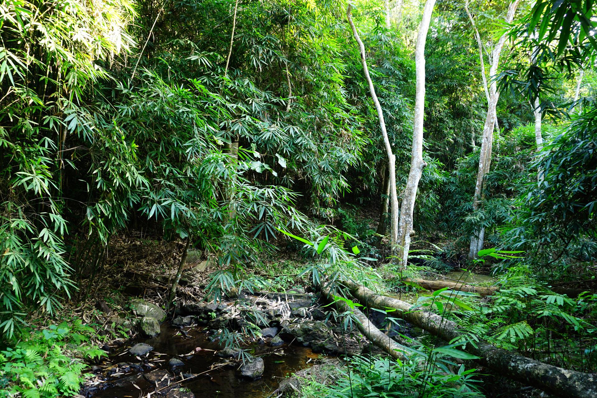 Dschungel, Costa Rica
